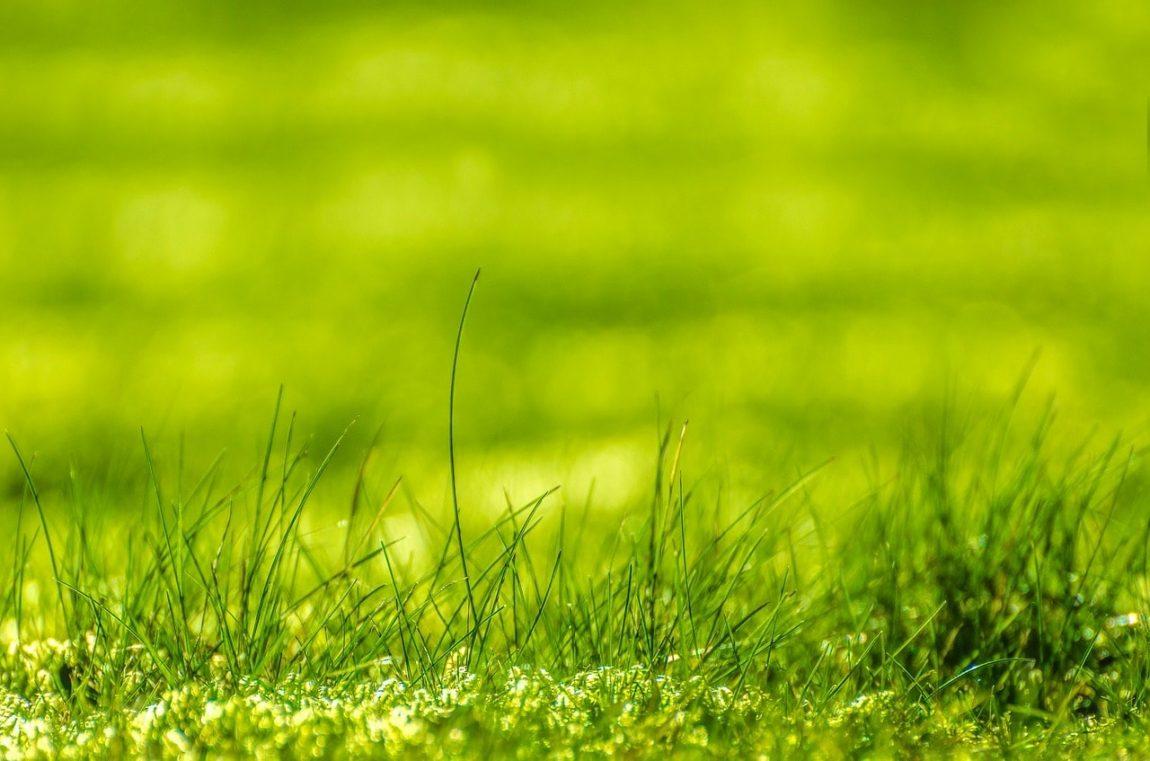 green-315216_1280-min.jpg